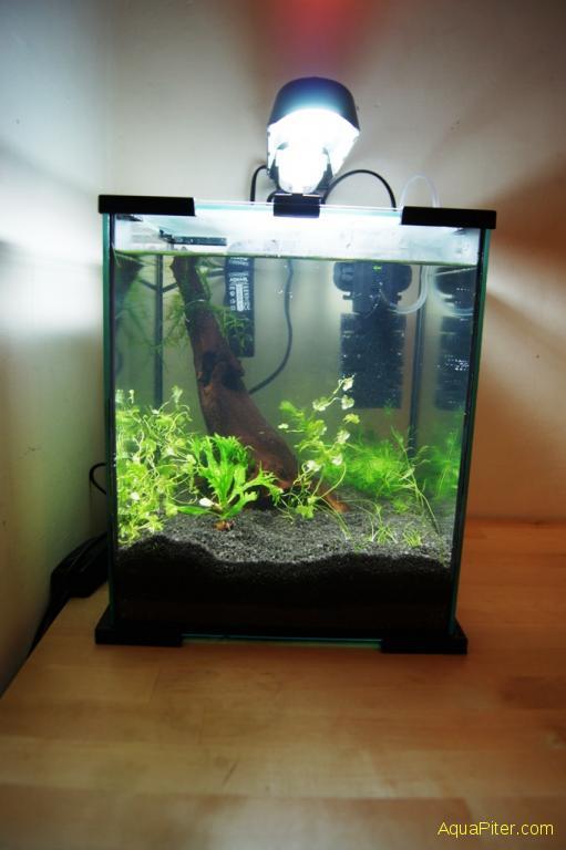 Как завести аквариум начинающему