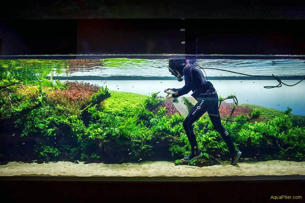 аквариум фото такаши амано