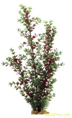 ArtUniq Bacopa red-green 60