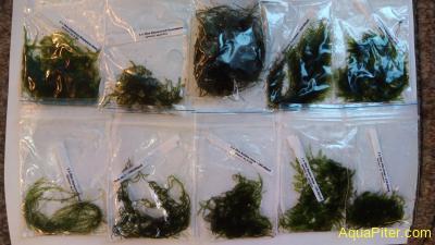 Набор растений Мхи-3