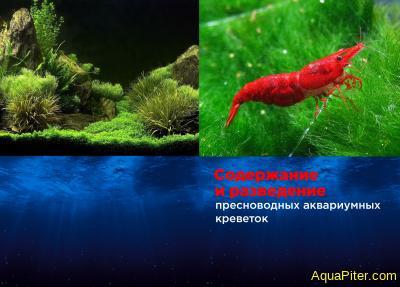 """Книга """"Содержание и разведение пресноводных аквариумных креветок"""""""