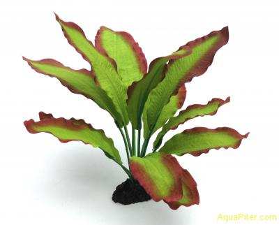 Шелковое растение