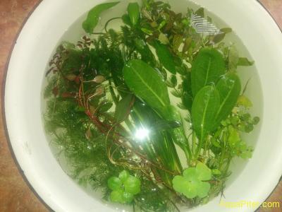 Набор растений Старт-1