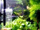 СО2-реактор Dennerle Nano Flipper для нано-аквариумов