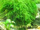 Bubble moss