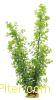 Искусственное растение 60 см, в картонной коробке, YS-10101